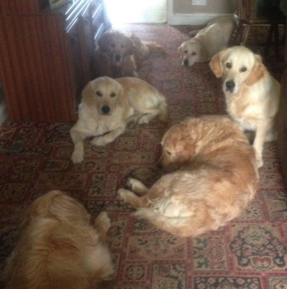 Some of the dogs resting