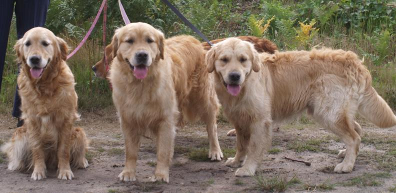 our dogs 4