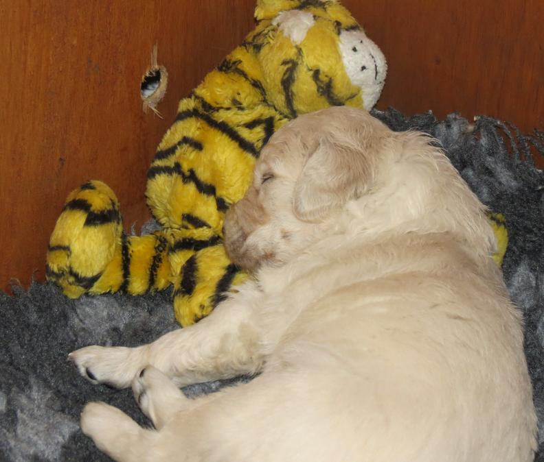 fast asleep with toys