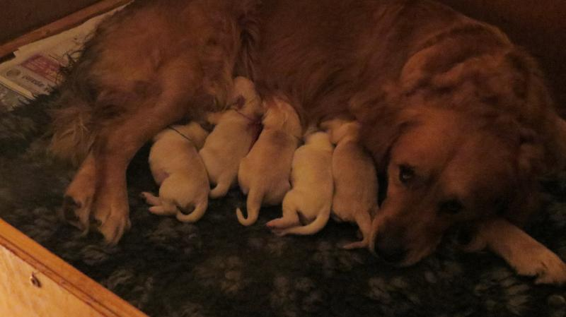 Bella's pups day 1