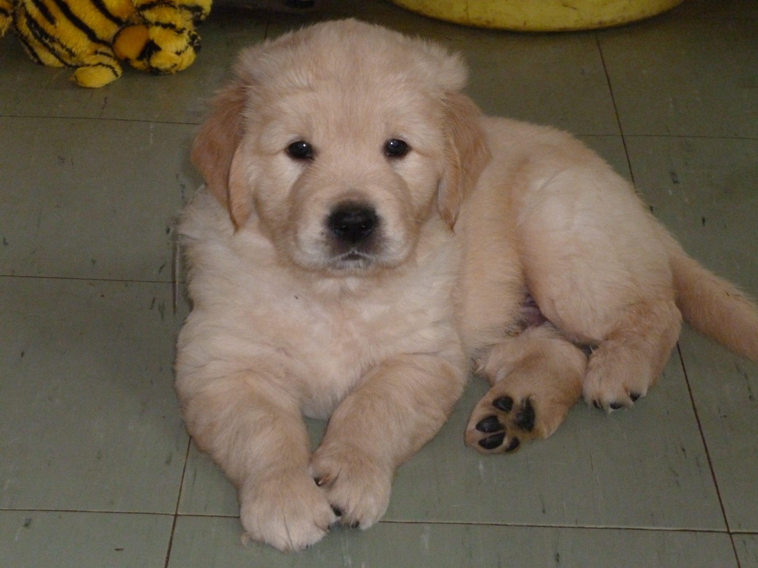 6 week old pup