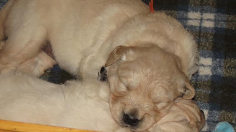 Elsa's pups 27