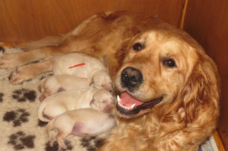 Elsa's pups 4 days old