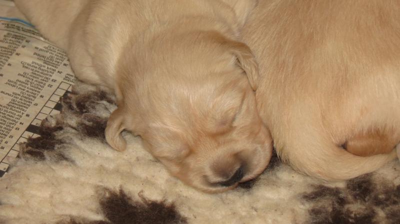 Elsa's puppies 9