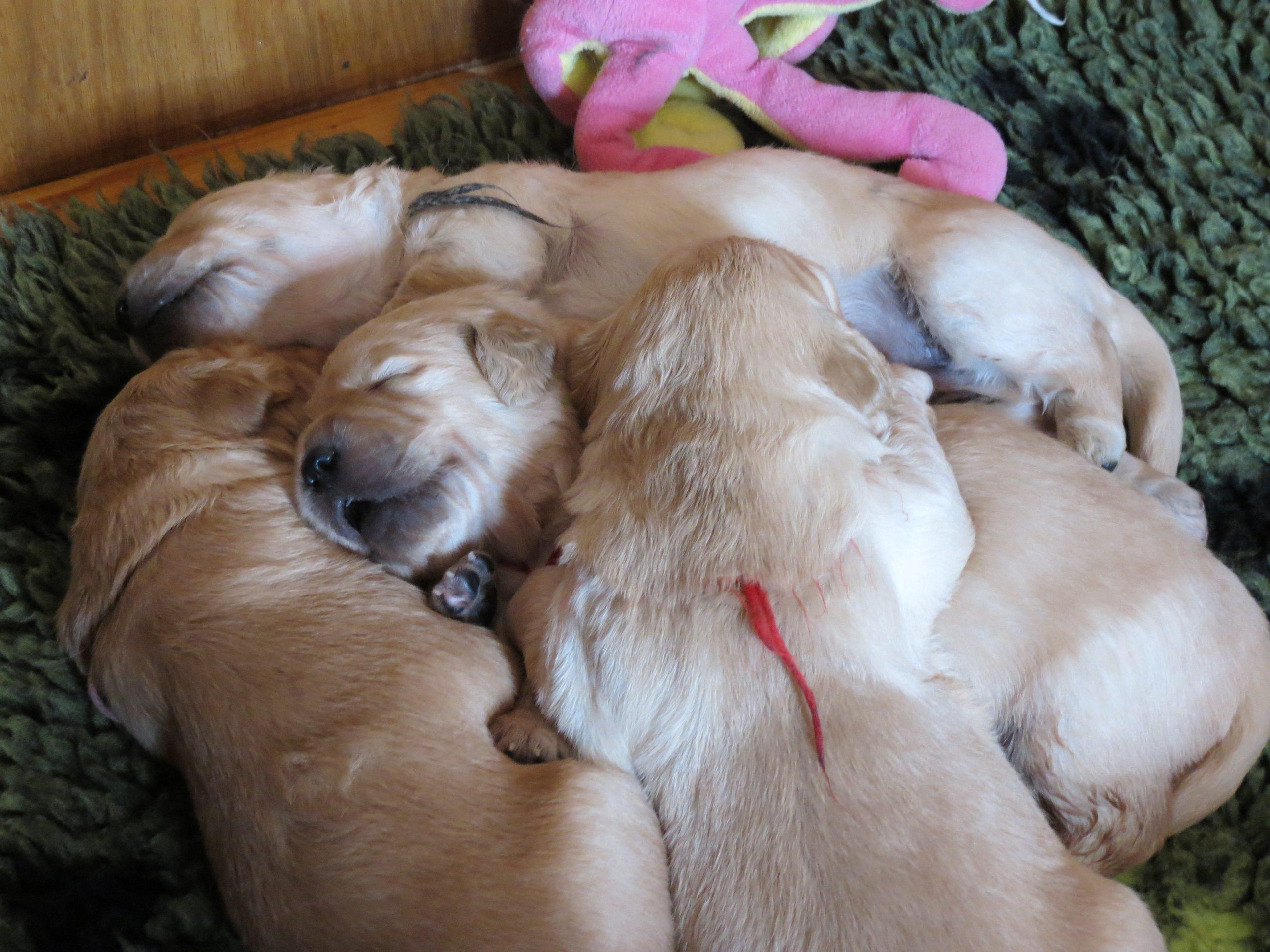 Elsa's pups 20.5.