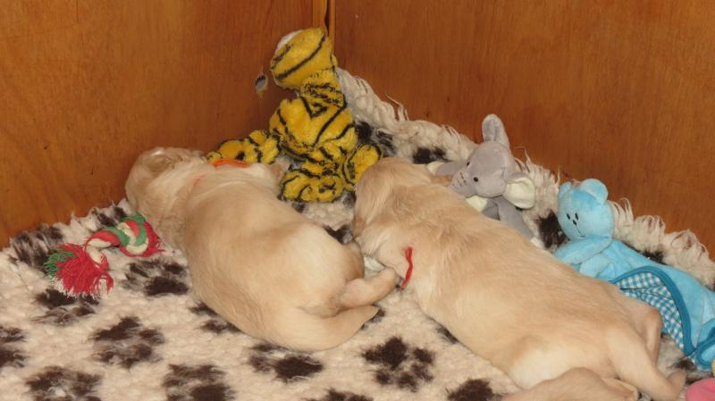 Elsa's pups 24