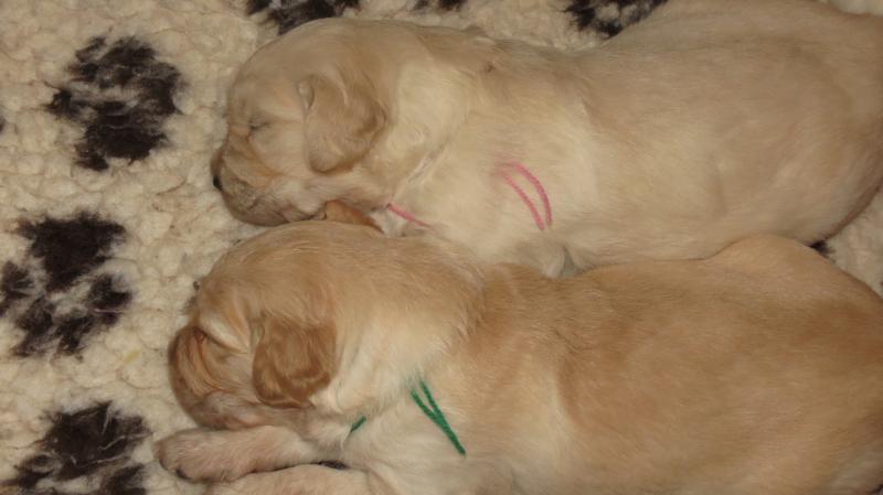 Elsa's puppies 25