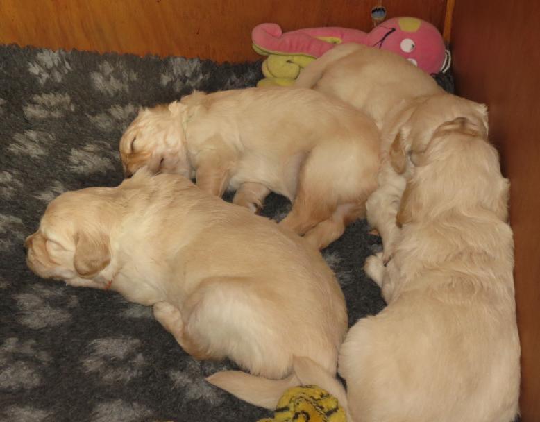 Elsa's pups 31