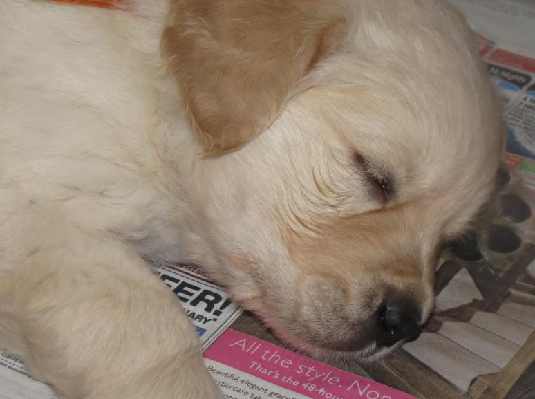 Elsa's pups 44