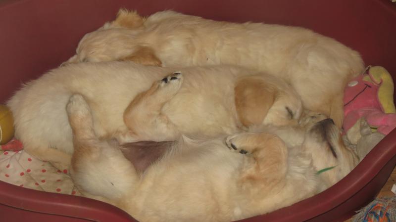 Elsa's puppies asleep