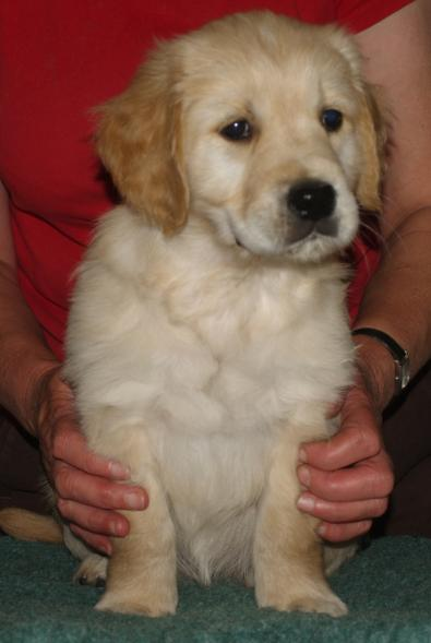 Elsa sitting at 8 weeks