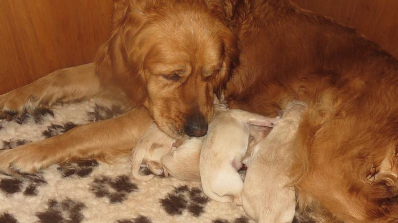 Elsa's new born puppies