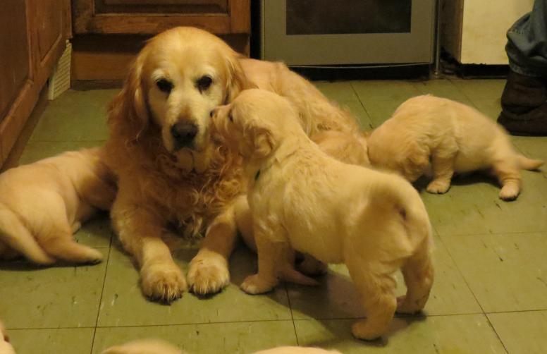 Emma and Pups