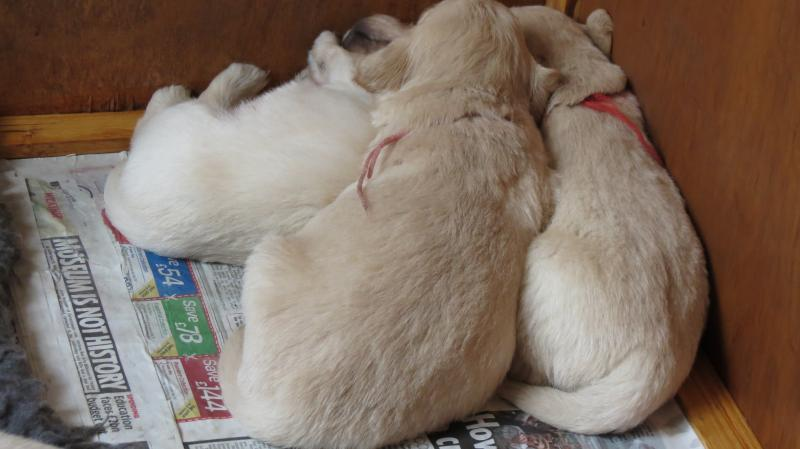 Group of pups asleep