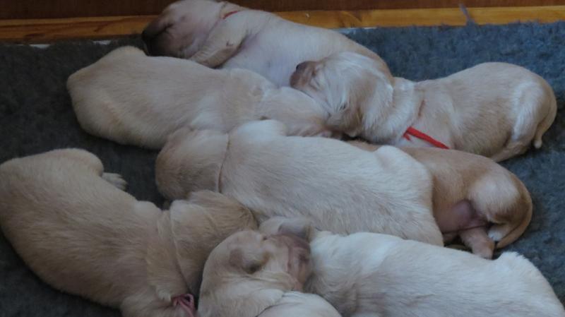 Keira's pups asleep.