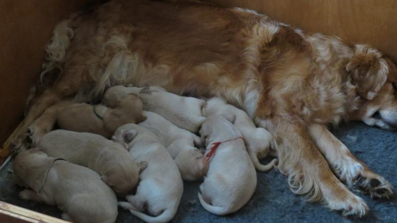 Keira's pups feeding