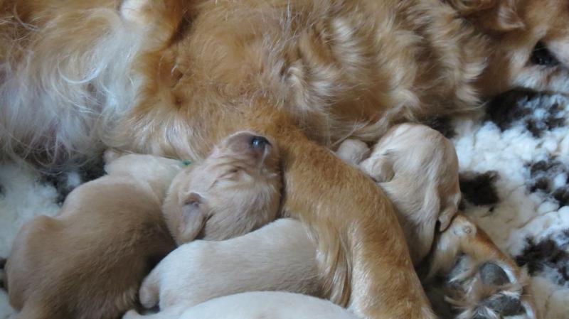 Keira's pups, 2 pups.