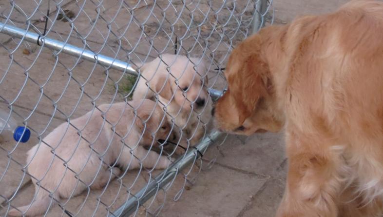 puppies say hello