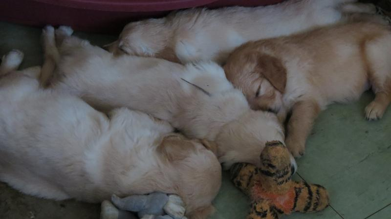 puppies asleep