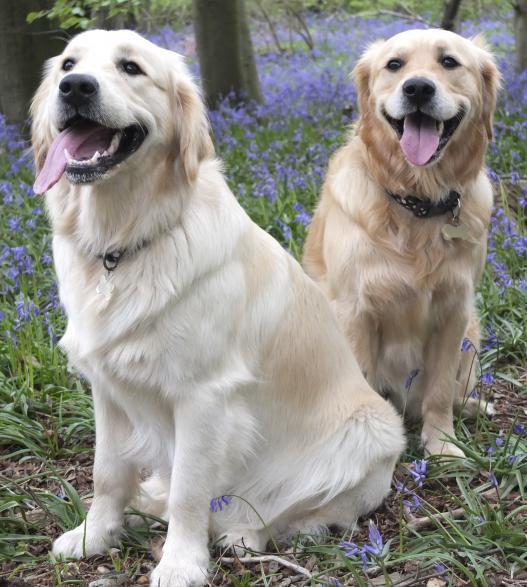 Pippa and Poppy