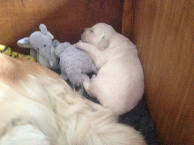 Sophie's pups 22 days old