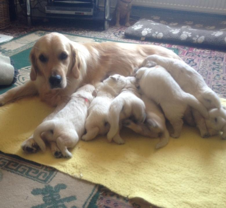 Sophie's pups 25 days old