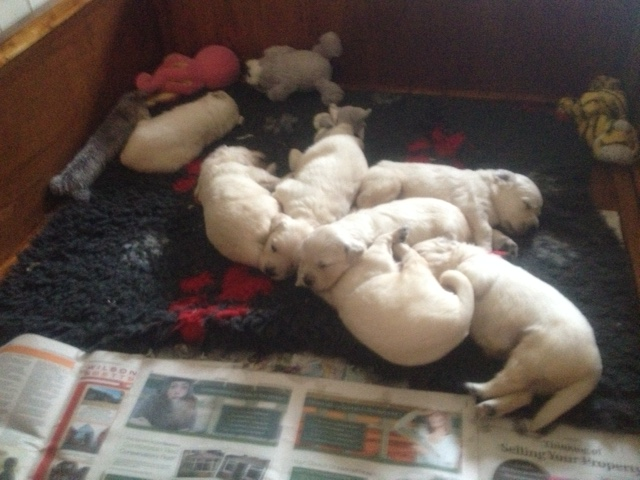 Sophie's pups 24 days old