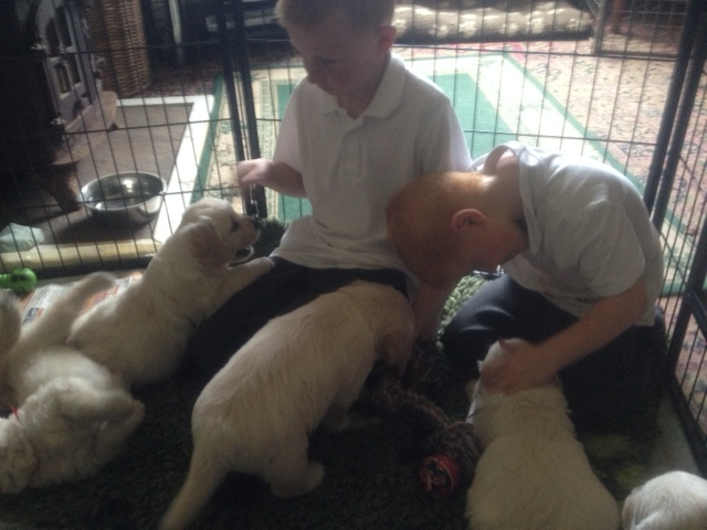 Sophie's pups and boys1