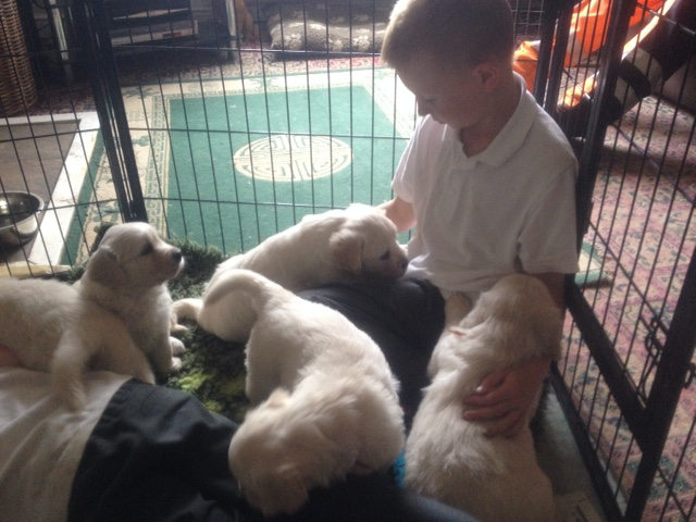 Sophie's pups and boys2