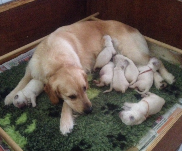 Sophie's pups 4 days old